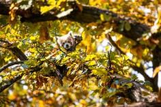 Buntes im Herbst © foto365.at