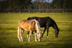 Horses © foto365.at