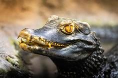 Kleines Krokodil © foto365.at