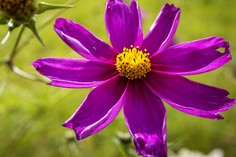 Die Farbe Lila © foto365.at
