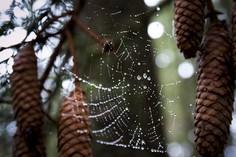 Spinnennetz © foto365.at