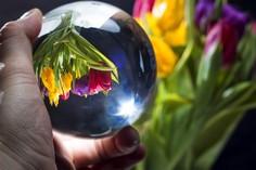 Tulpenkugel © Foto 365